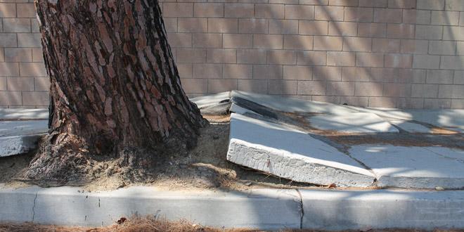 Safe Sidewalks LA Approved by City Council