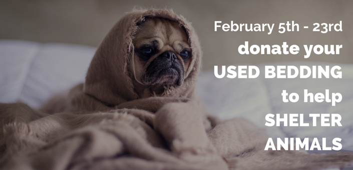 Donate Used Bedding for Shelter Animals